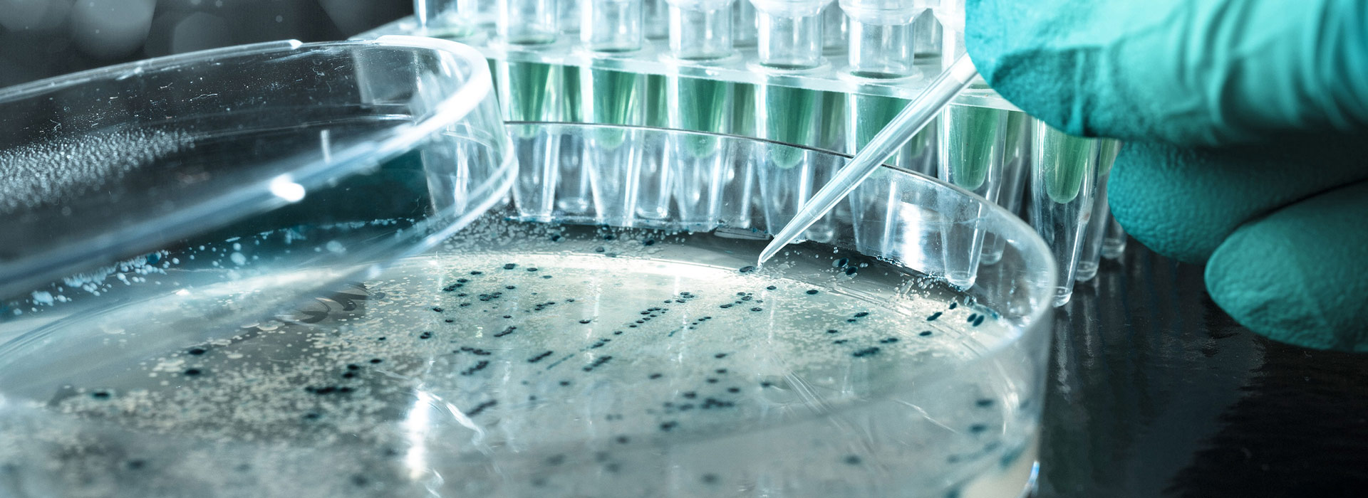 Лабораторная посуда для микробиологии